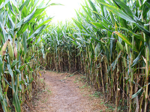 Make your way through these fun corn mazes