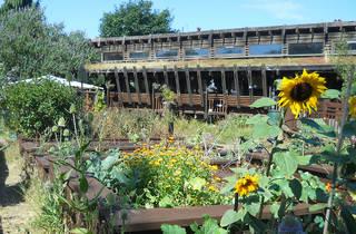 Centre For Wildlife Gardening Peckham 2015