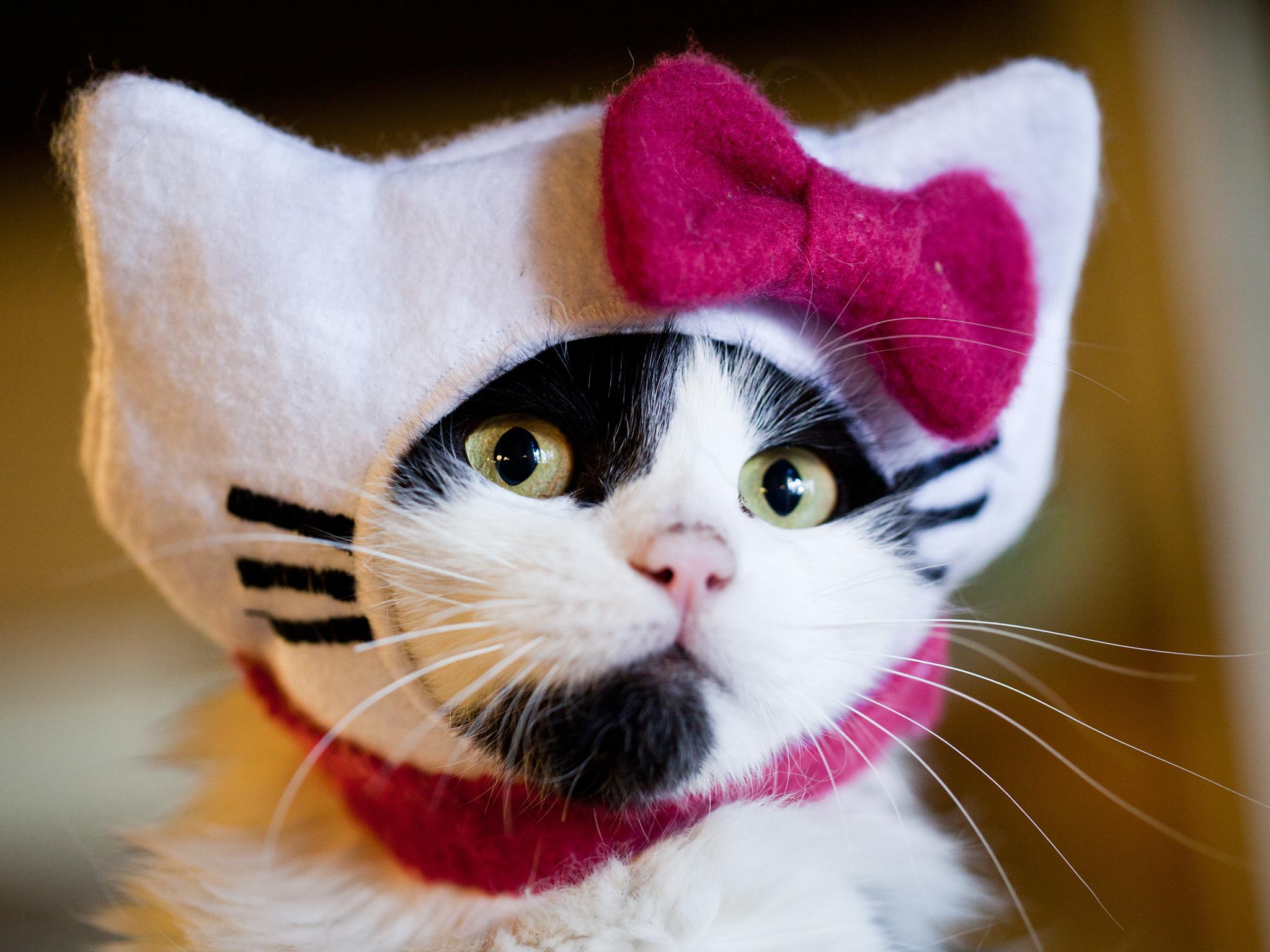 Los mejores disfraces de Halloween para tu amscota. La Gatería