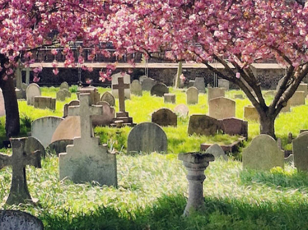 Spring blossom over Brompton Cemetery