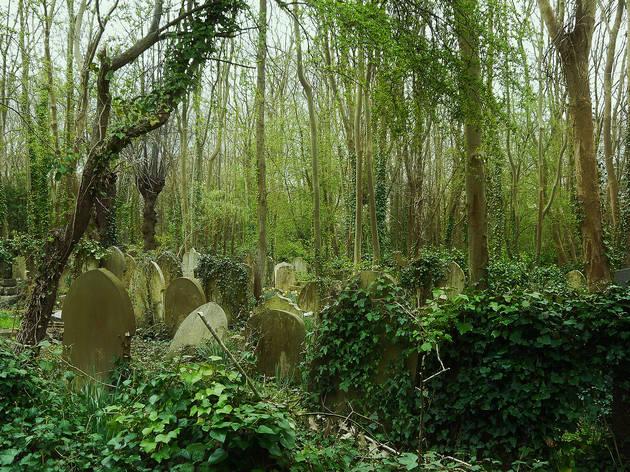 Wilderness, Highgate Cemetery