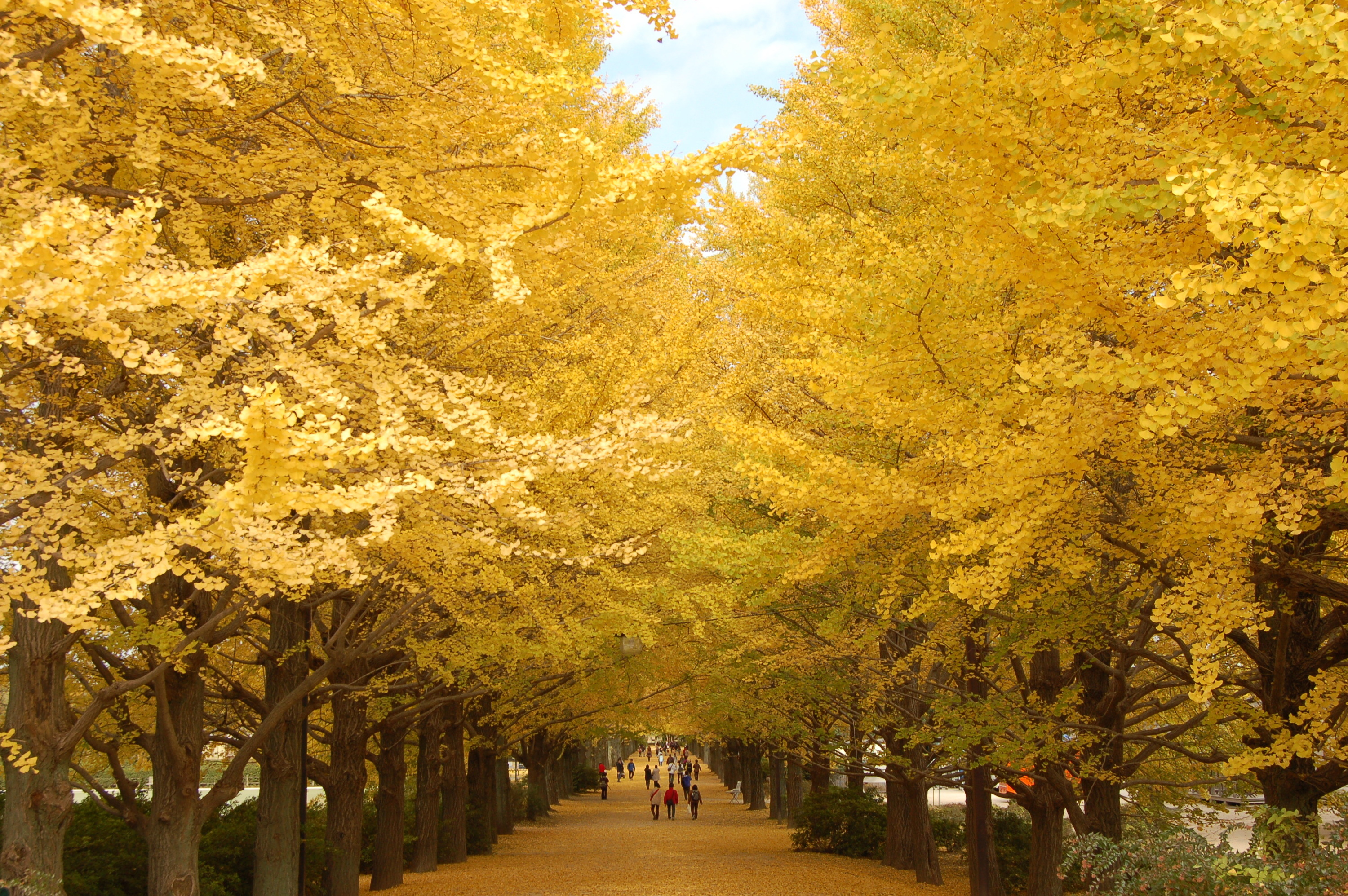 'The best spots for autumn leaves in Tokyo' from the web at 'https://media.timeout.com/images/102933584/image.jpg'