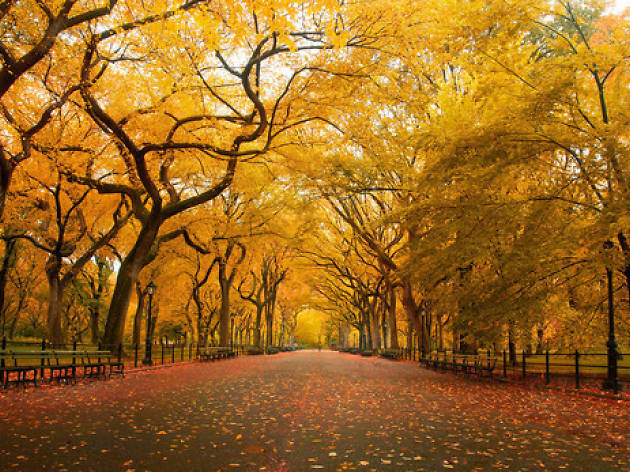 central park in new york the ultimate guide to nyc s backyard