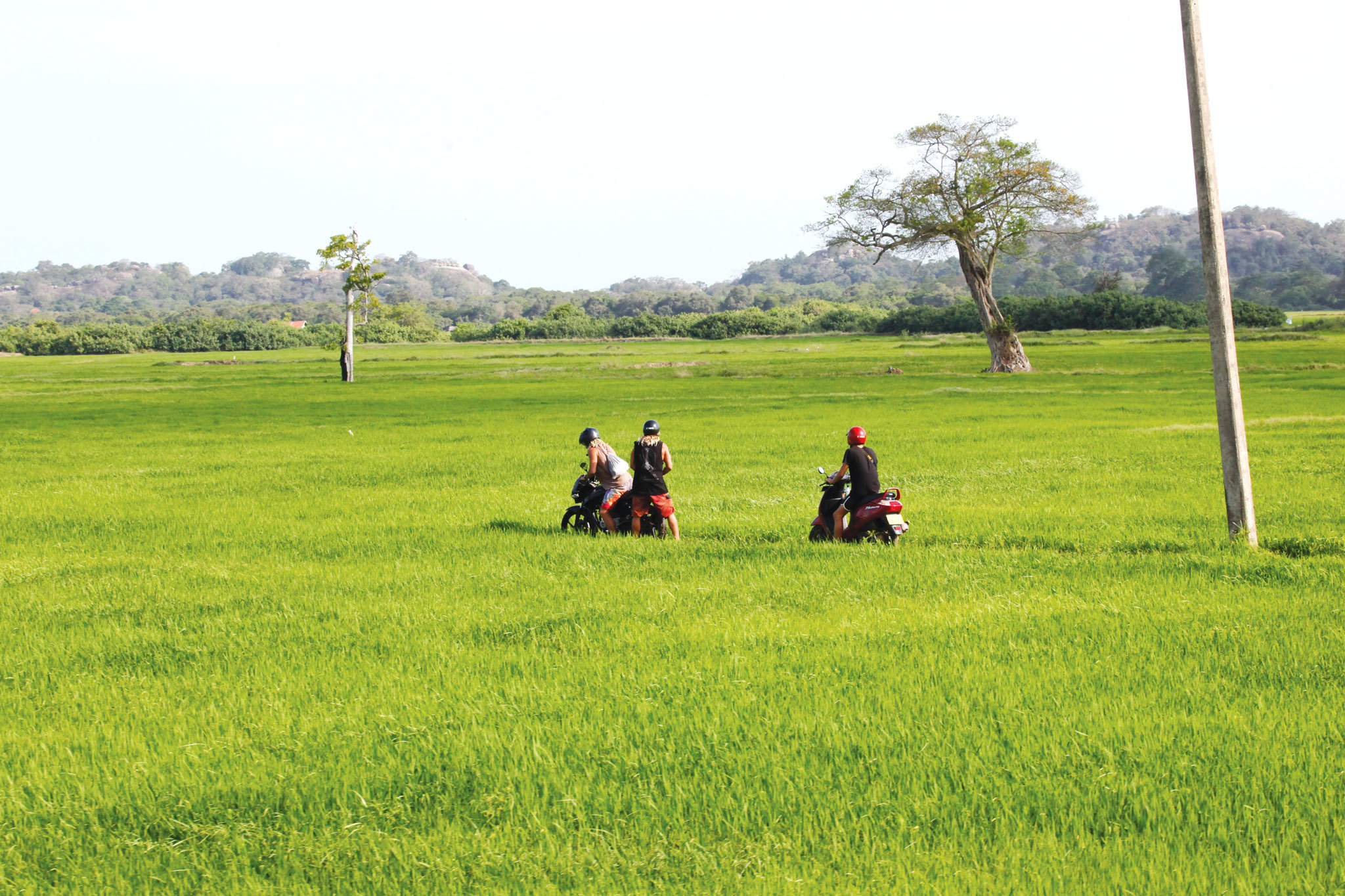 Explore the paddy fields