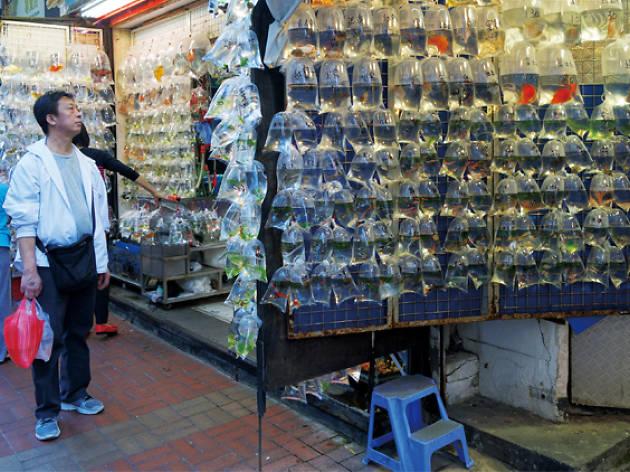 Tung Choi Street goldfish market
