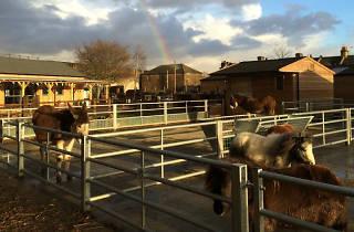 Brooks Farm Leytonstone 2015