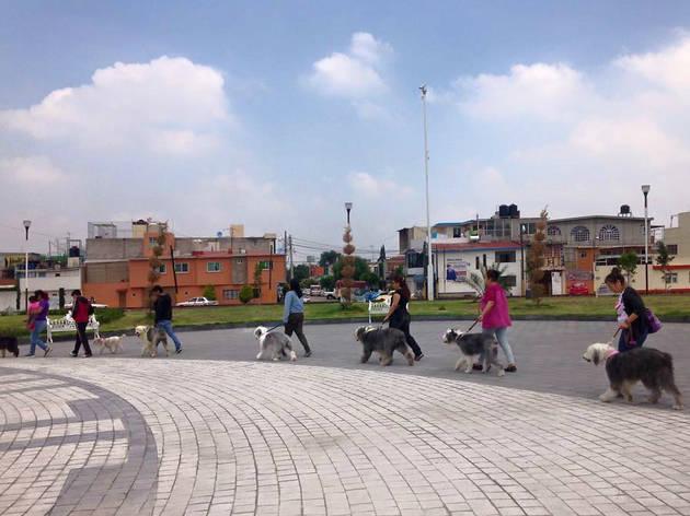 (Foto: Cortesía Viejo Pastor Inglés de México)