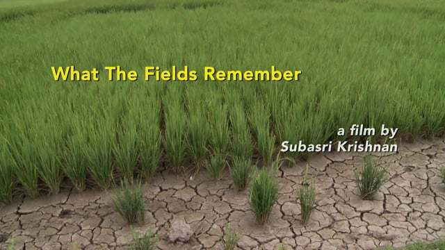What the Fields Remember