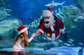 Santa Swims into Sea Life London Aquarium