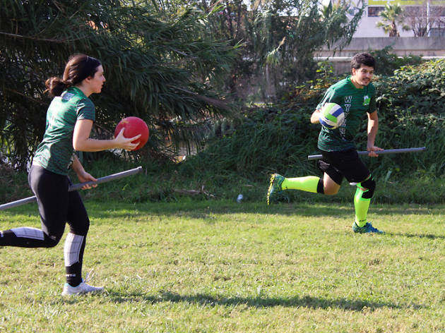 Quidditch Harry Potter