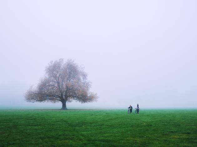 Fog in Peckham Rye Park, south London.