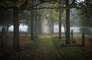 Mist around gravestones at Fulham Cemetery