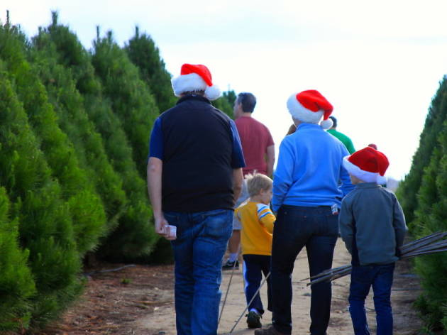 Peltzer Pines Christmas tree farm