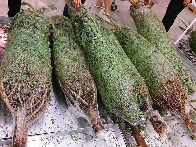 Monterey Pines Christmas trees