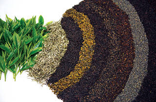 The tastes and shades of Ceylon Tea