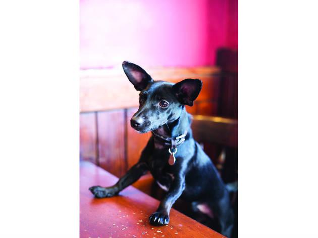 Pub Dogs
