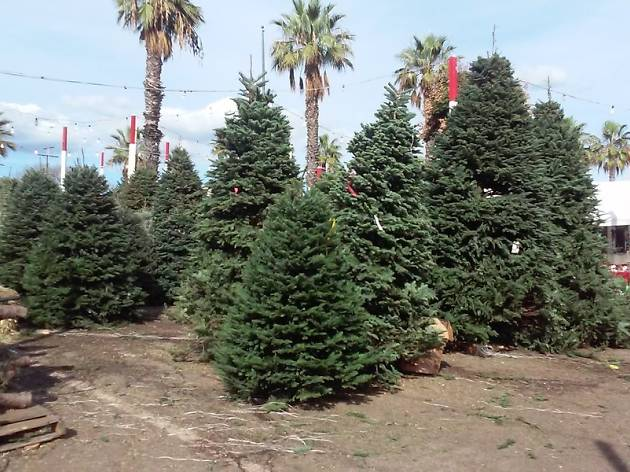 Shawn's Christmas Trees