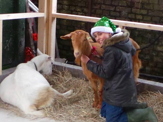 Christmas Festival at Kentish Town City Farm