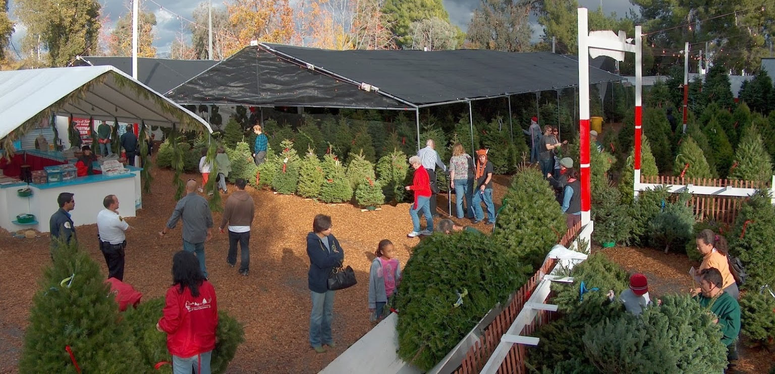 Christmas Tree Lots.Where You Can Buy Christmas Trees In Los Angeles