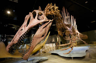 Spinosaurus exhibit at National Geographic's Explorer's Hall