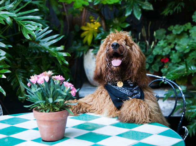 Dog sitting at a table with plant pot