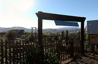 Potrero Hill Community Garden