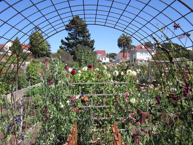 Fort Mason Community Garden