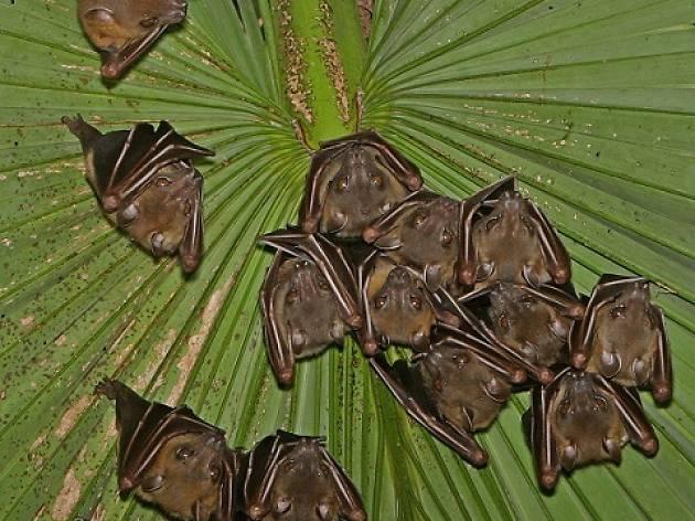 Bats are Beautiful!
