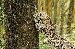 Exhibition of wildlife photographs