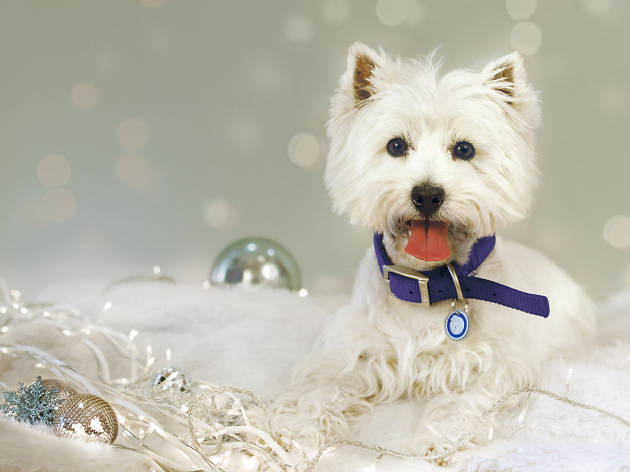 Battersea Dogs & Cats Home's Carol Concert