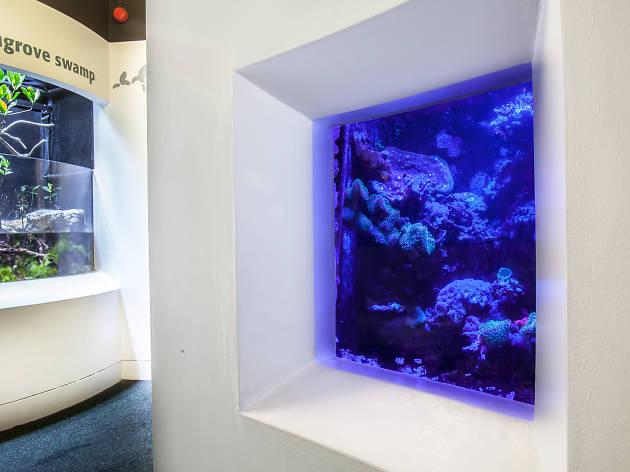 Horniman Coral
