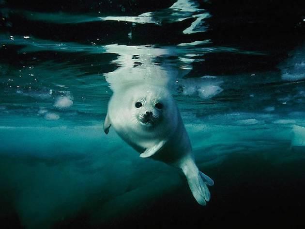 Brian Skerry: Ocean Wild