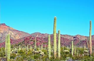 Hot Cactus