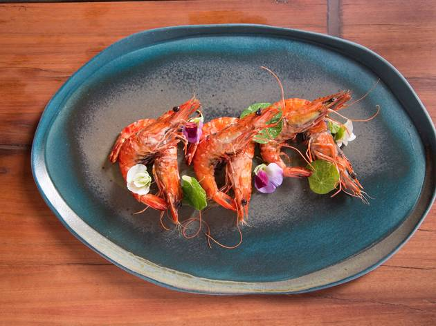 A shot of six prawns on a blue blue at Firedoor