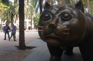 Gato del raval