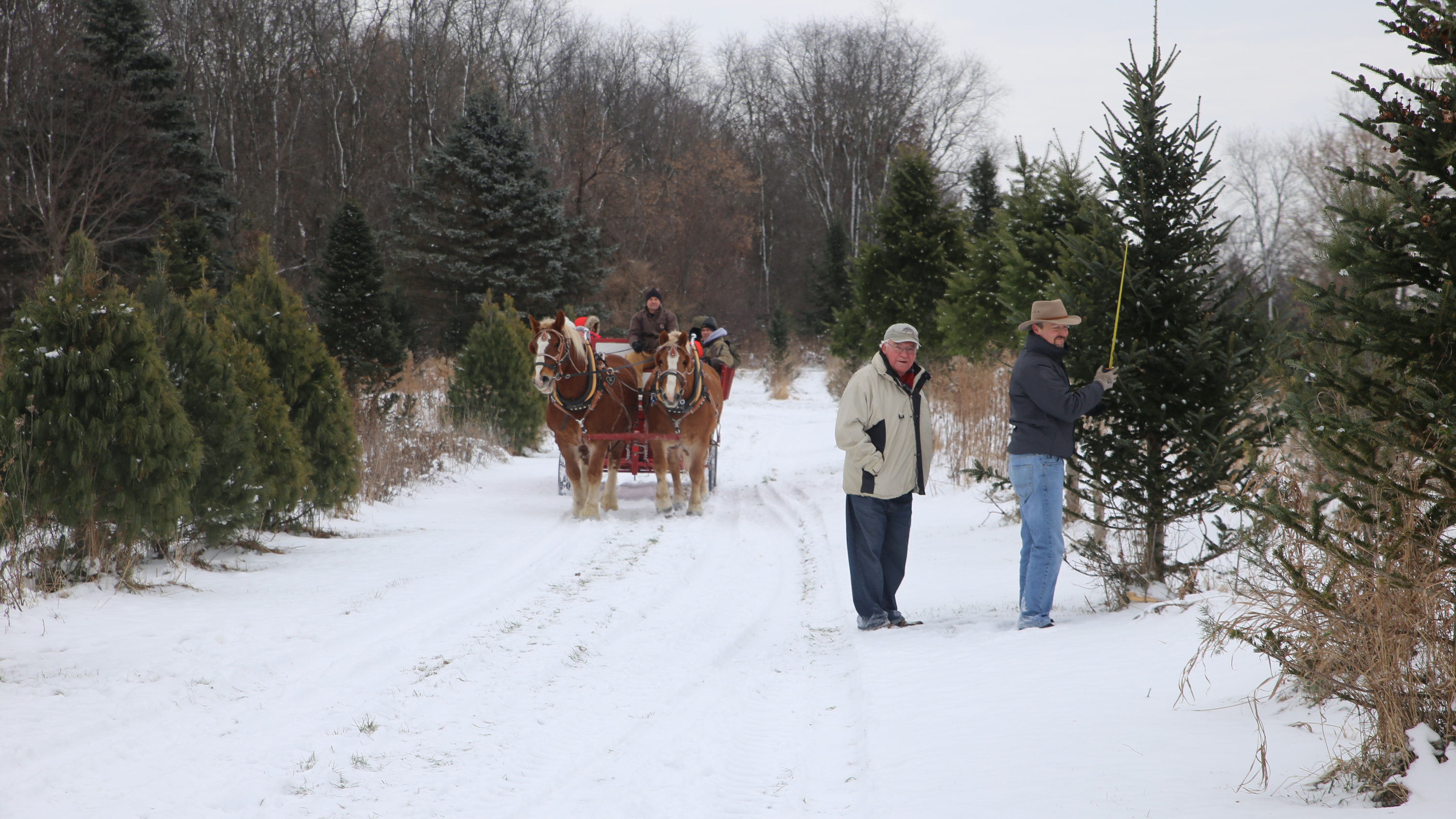 bens christmas tree farm - Christmas Tree Farm Near Me