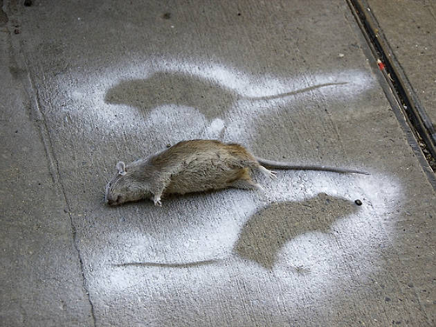 The Lower East Side now has the worst rat problem in the city