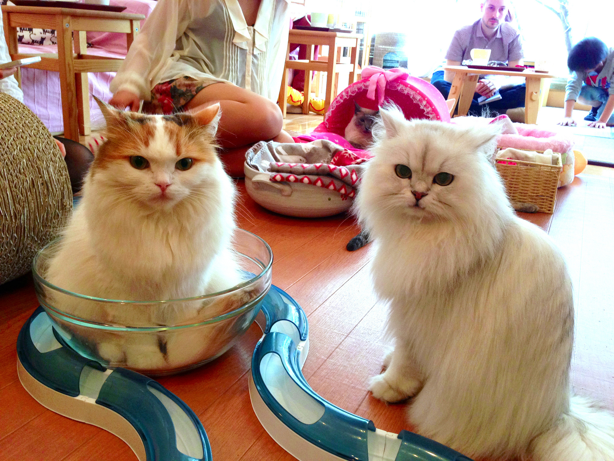 Cat Cafe Near Chicago