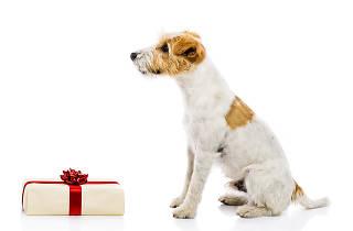 Regalos Para Mascotas Navidad Regalos De De Mascotas Regalos De Navidad Para MVqLSGUpz