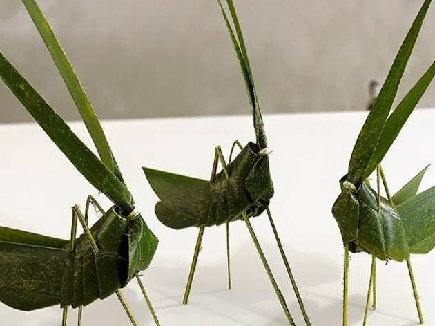 Free grasshoppers workshop