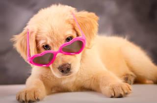Foto de tu mascota (Foto: Cortesía Iva Koukalová)