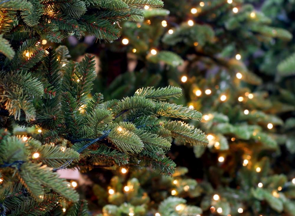 Cranbury Christmas Lights