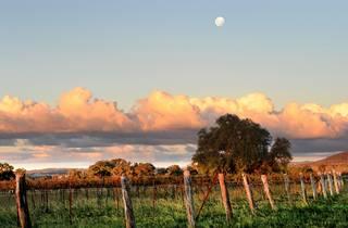 A shot of a wine vineyard at Mudgee at dusk.