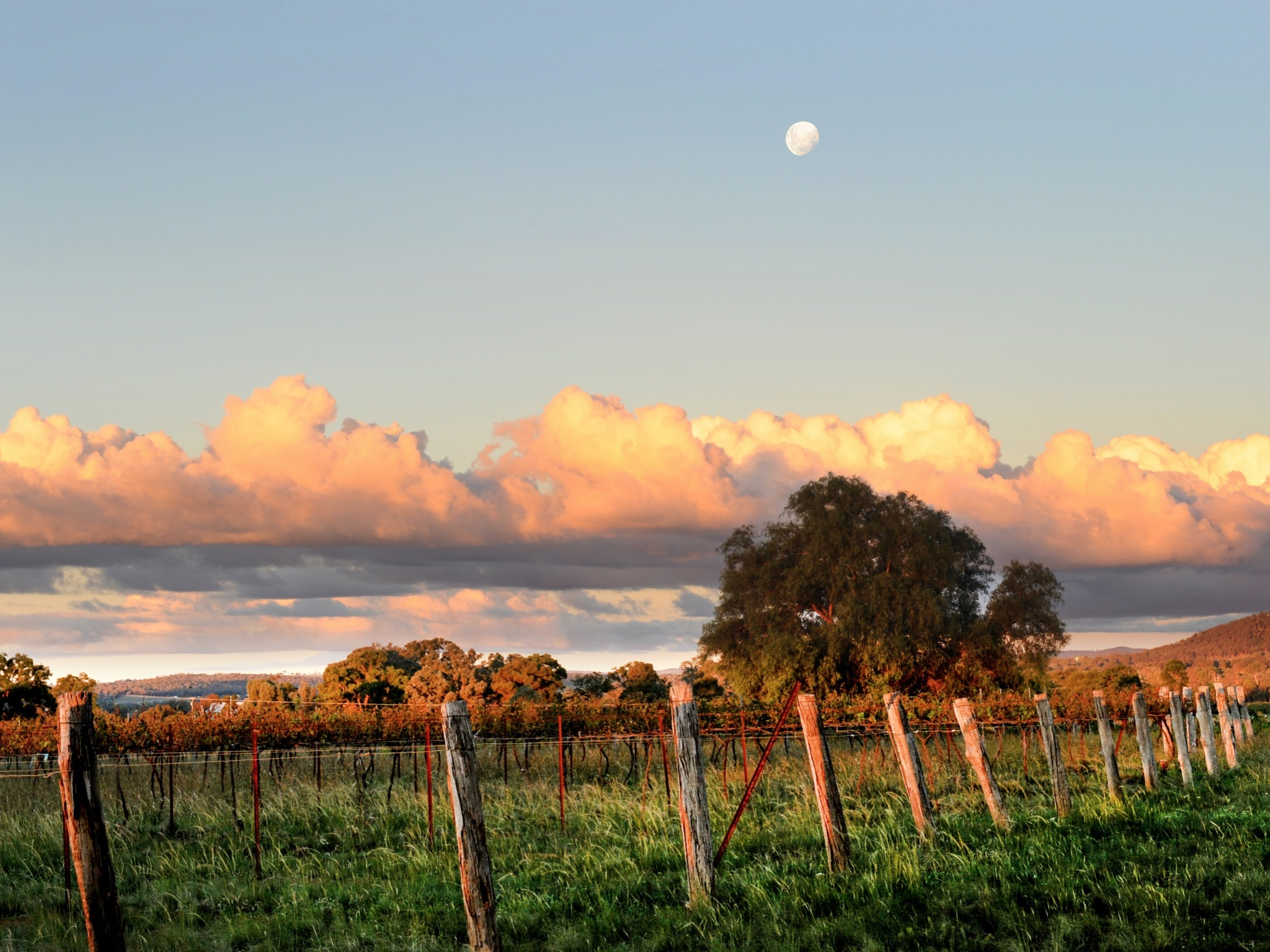 A shot of a wine vineyard at Mudgee at dusk.