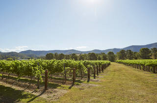 The best wineries in the Hunter Valley: A scenic shot of wine vineyards at a winery in the Hunter Vallery
