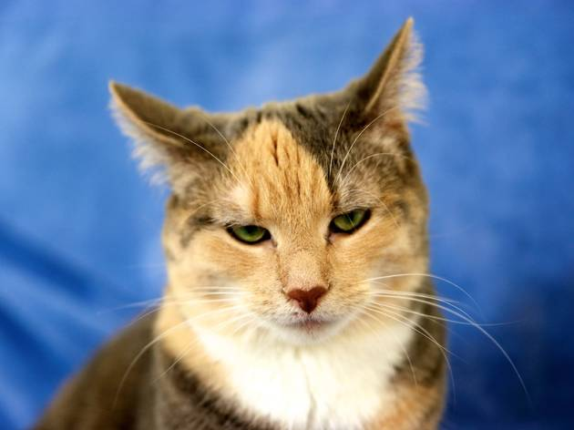 A generic image of a cat looking unimpressed