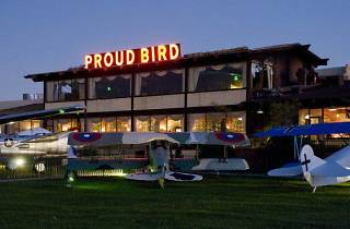 Proud Bird (CLOSED)