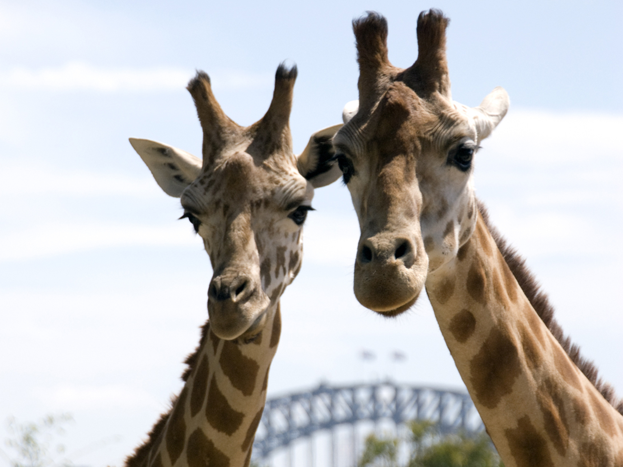 The best activities for kids in Sydney