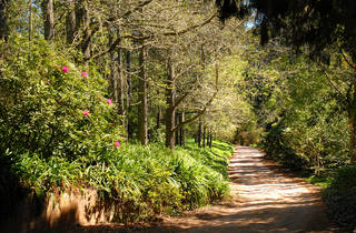 A shot of a narrow dirt road in Bowral snaking through plants an