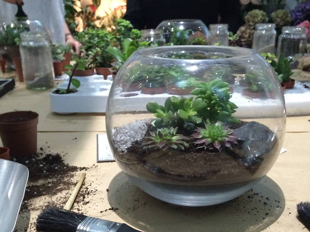 Terrarium Tuesdays